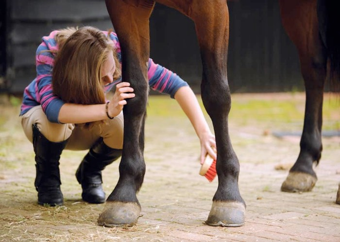 Horse owner caring for her horses legs with a red brush